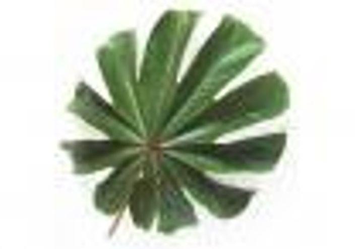 Der tropische Regenwald umspannt die Erde wie ein grüner Gürtel zu beiden Seiten des Äquators.