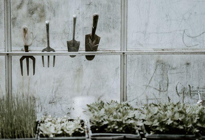 Fenster eines Gartenhauses, im Vordergrund Pflanzen, an einer Halterung hängen Gartenwerkzeuge