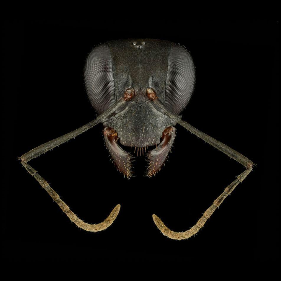 Alleskönner: So vielfältig sind Ameisen