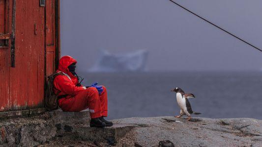 Die Antarktis ist der letzte coronafreie Kontinent. Forscher wollen, dass das so bleibt