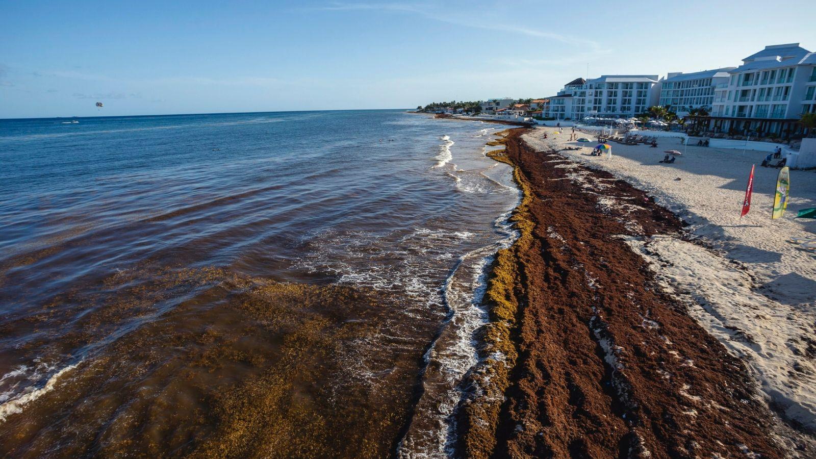 Haufenweise modernder Seetang bedeckt am 4. Juli 2021 den Strand des Parque Fundadores in der mexikanischen ...