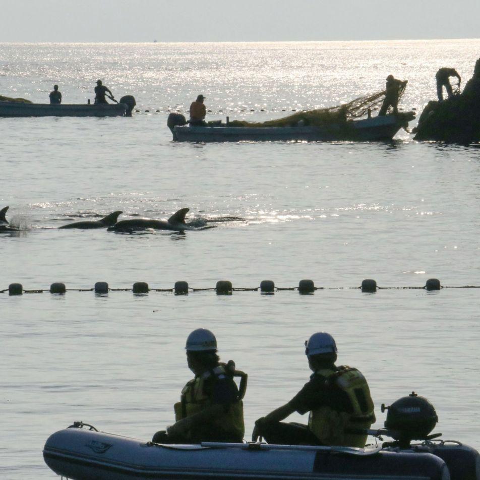 Tod in der Bucht von Taiji: Japan macht Jagd auf Delfine