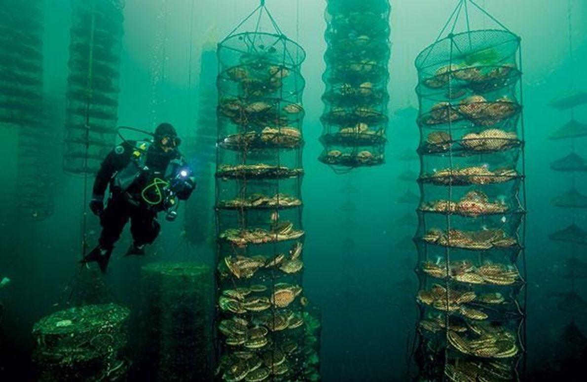 Aquakultur vor Vancouver Island, Kanada