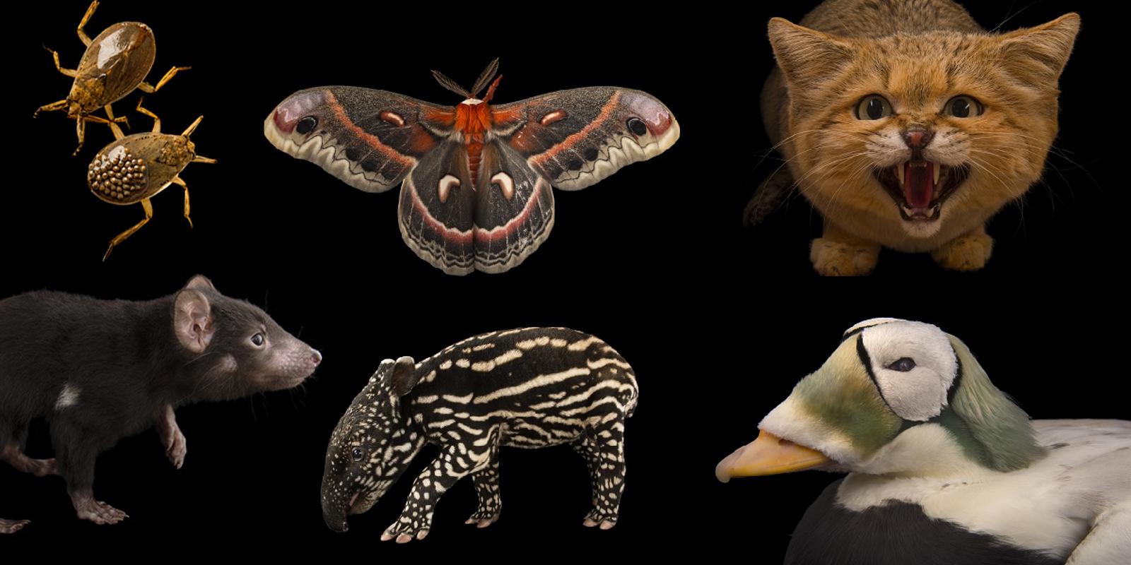 Fotograf Joel Sartore baut eine Arche für die Tiere der Welt