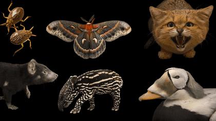 Photo Ark: Fotograf Joel Sartore baut eine Arche für die Tiere der Welt