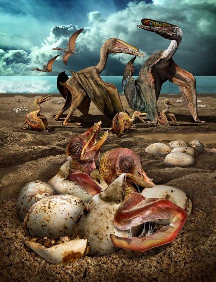 Rekonstruktion des Lebens von Hamipterus tianshanensis. Diese Spezies lebte vor mehr als 100 Millionen Jahren im ...