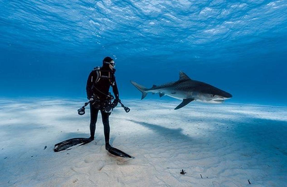 Auge in Auge mit dem Tigerhai