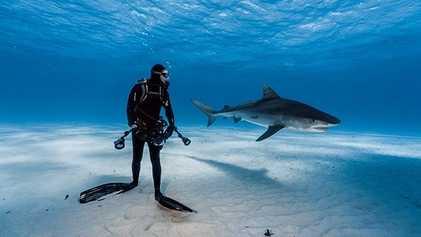 Galerie: Tigerhaie: Hungrig. Überlegen. Neugierig