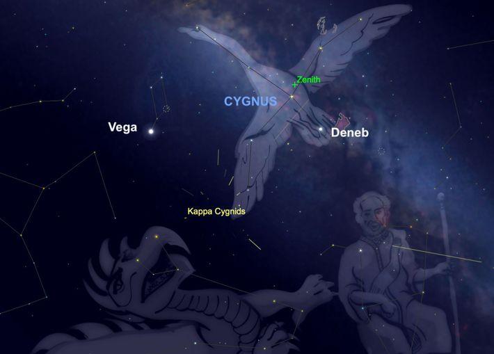Der Meteorstrom der Kappa-Cygniden scheint aus dem Sternbild Schwan zu entspringen.