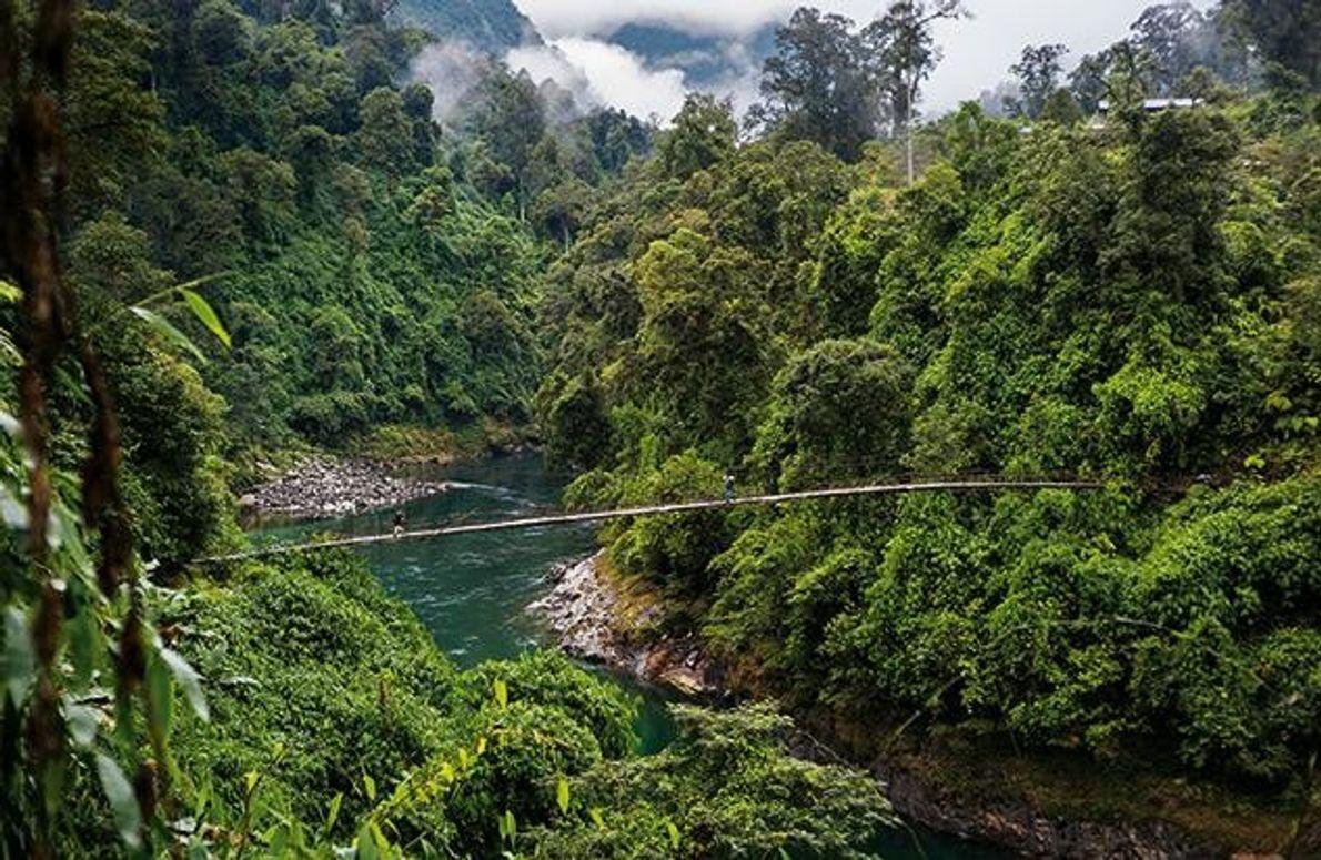 Um zum Fuß des Hkakabo Razi zu gelangen, mussten die Bergsteiger wochenlang durch den Dschungel wandern …