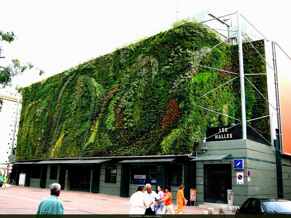 Grüne Kunst in Avignon: Die Außenfassade der Markthalle.