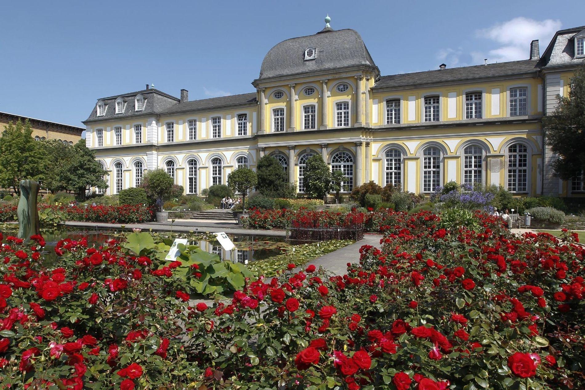 Blütenpracht im Botanischen Garten am Poppelsdorfer Schloss. Im Schlossinneren befindet sich eine Mineraliensammlung.