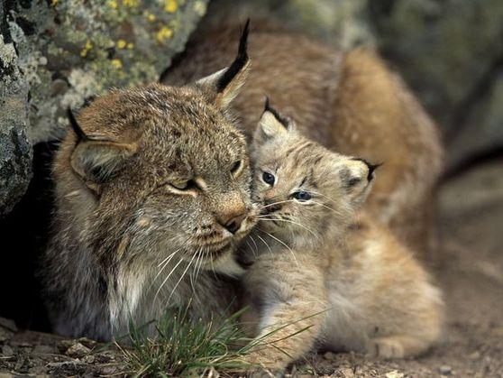 Galerie: 10 Tierbabys in freier Natur
