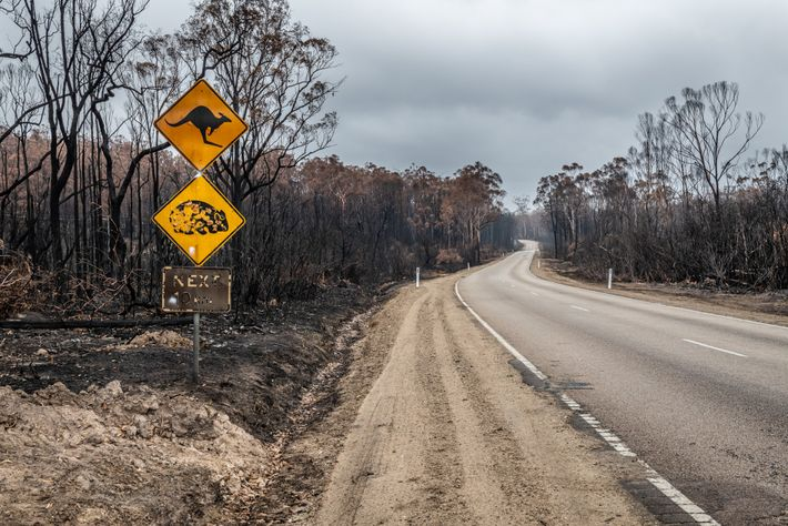 Burnt signs warning of kangaroo and wombat crossings stand among the skeletons of trees in South ...