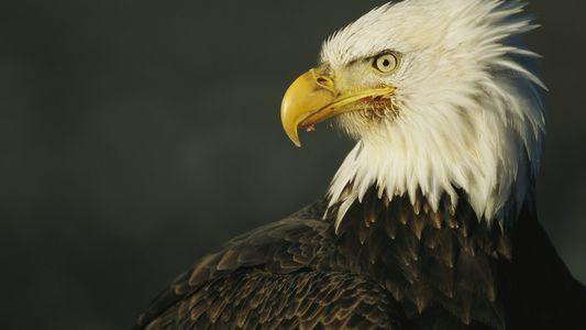 Wie entscheiden wir, welche Arten bedroht sind?