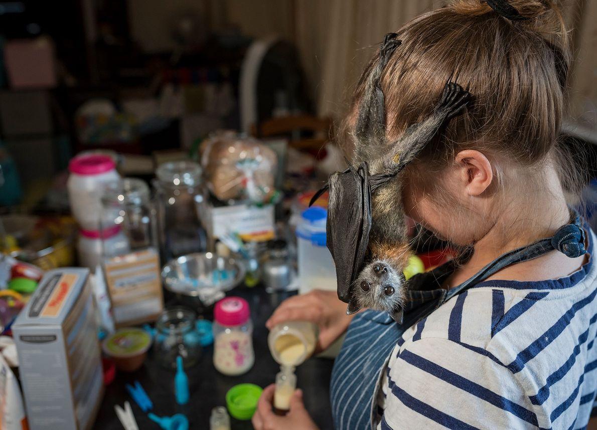 Linsell, eine Tierpflegerin in Ausbildung, bereitet in Julies Küche das Frühstück für drei junge Graukopf-Flughunde vor
