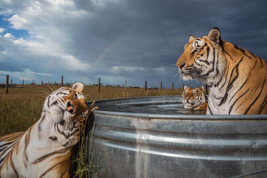 Die besten National Geographic-Tierfotos 2019