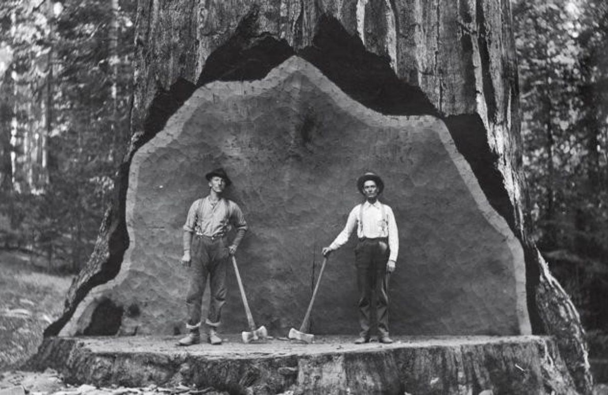 Baumfäller Anfang des 20. Jahrhunderts