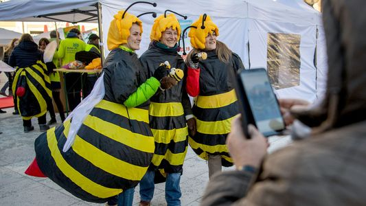 Bayern im Petitionsfieber: Rettet die Bienen!
