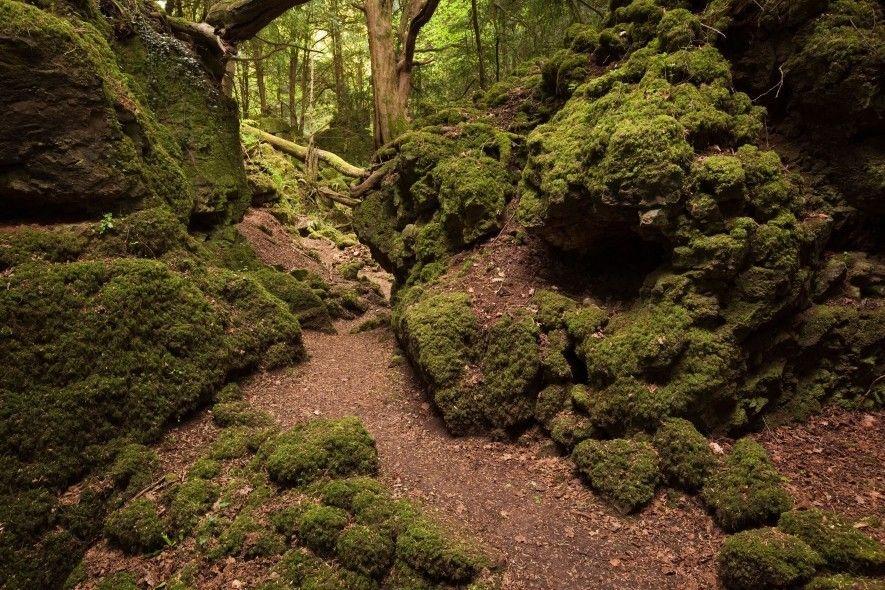 Das sagenumwobene Puzzlewood im Forest of Dean ind Gloustershire, Großbritannien, war Drehort für eine Kampfszene in ...