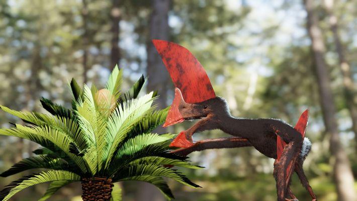 Anhand des sehr gut erhaltenen Fossils konnte belegt werden, dass die Flugsaurierspezies aufgrund des riesigen Kopfkammes ...