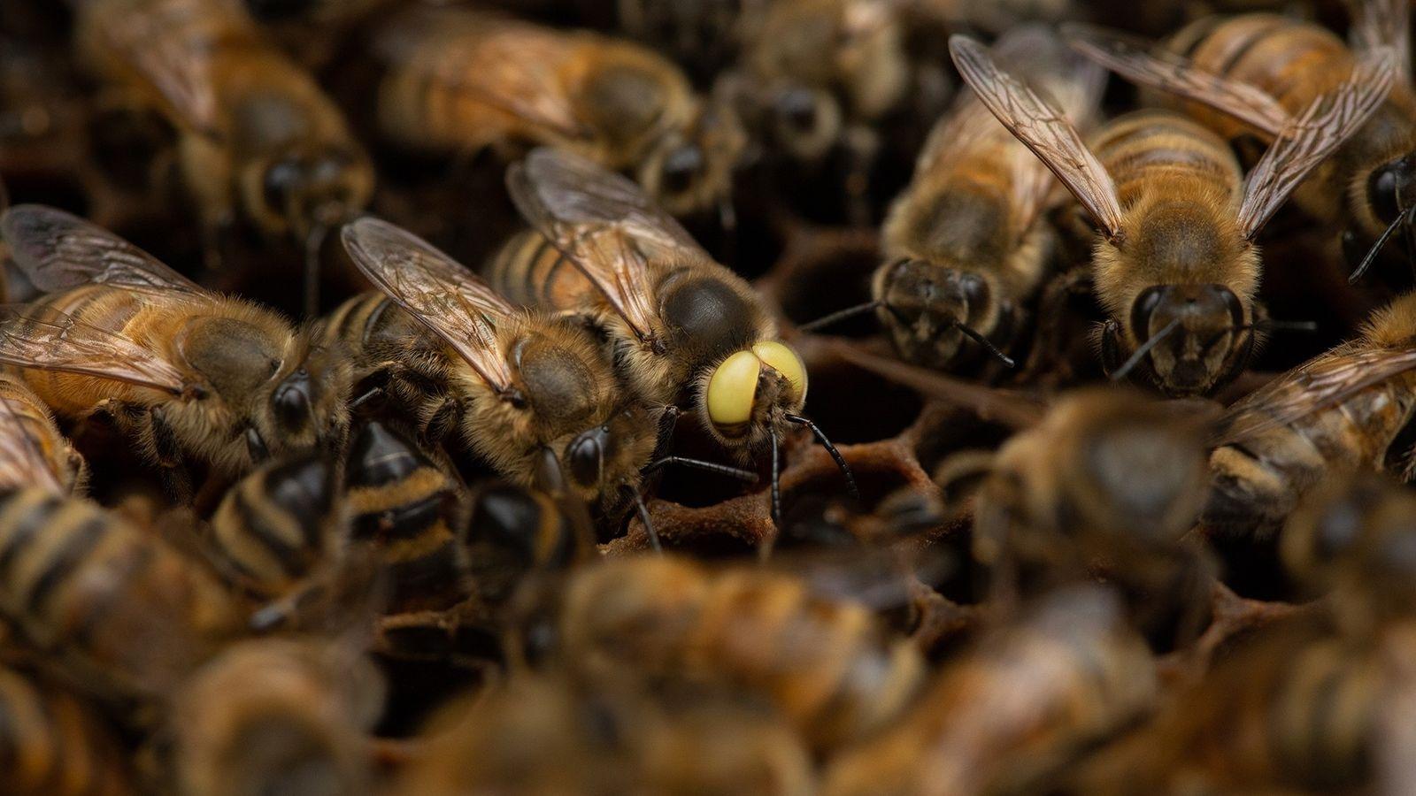 """""""Ich halte seit 1976 Bienen, und das ist das erste Mal, dass ich so etwas gesehen ..."""