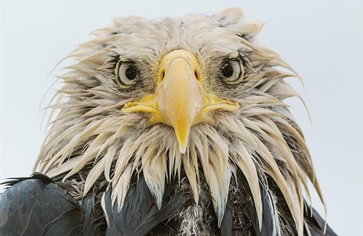 Begossener Vogel