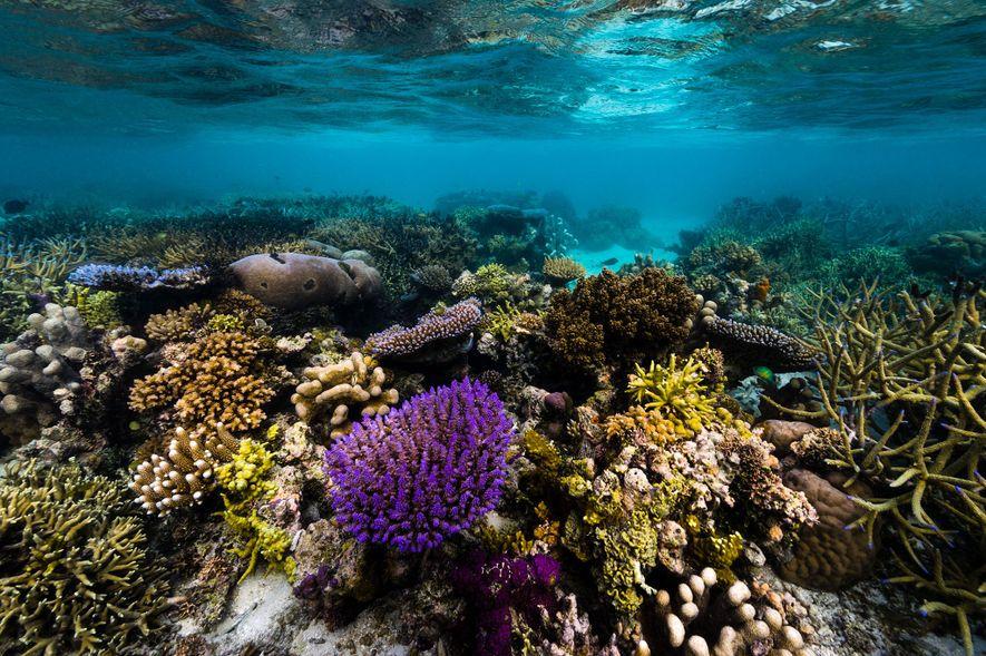 Papua-Neuguinea zeichnet sich unter anderem durch seine überwältigende Artenvielfalt aus, sowohl im Wasser als auch an ...