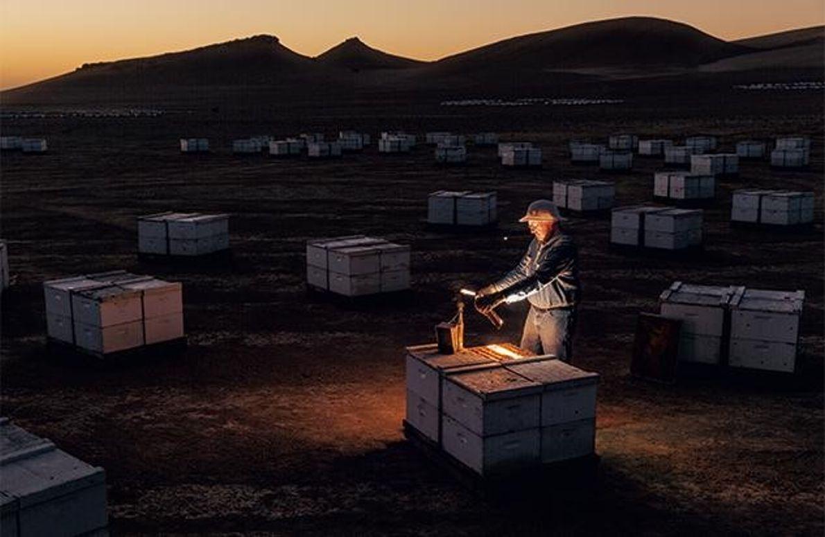Bienen-Import