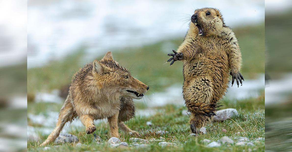 Die besten Wildtierfotos 2019
