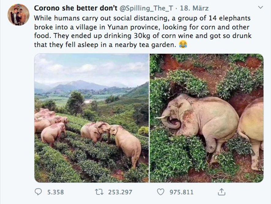 Posts in den sozialen Medien behaupteten, dass sich Elefanten aufgrund der Abwesenheit von Menschen in ein ...