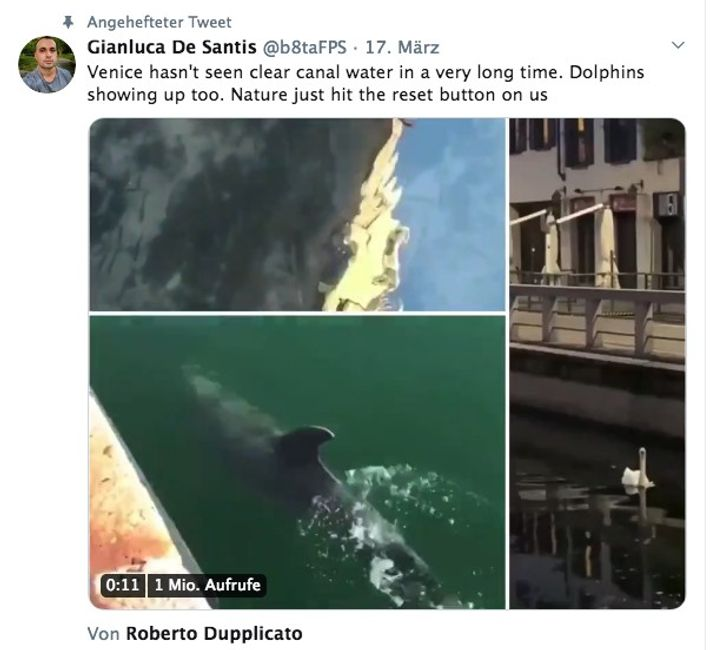Auch wenn Posts in den sozialen Medien anderes behaupten, schwimmen in den Kanälen von Venedig keine ...