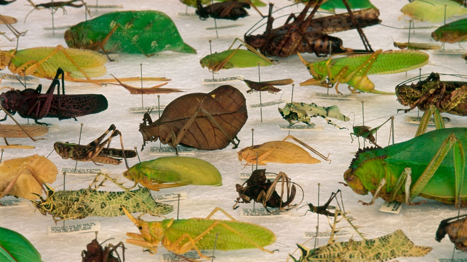 Verschiedene Käferarten