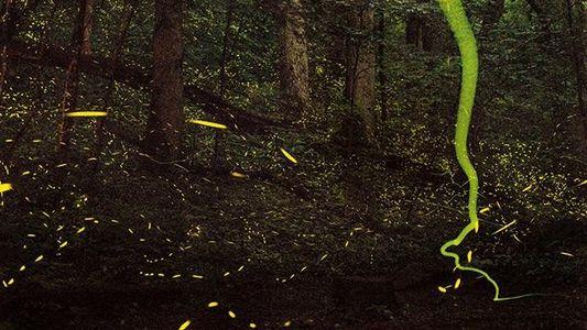 Galerie: Biolumineszenz: Licht an!