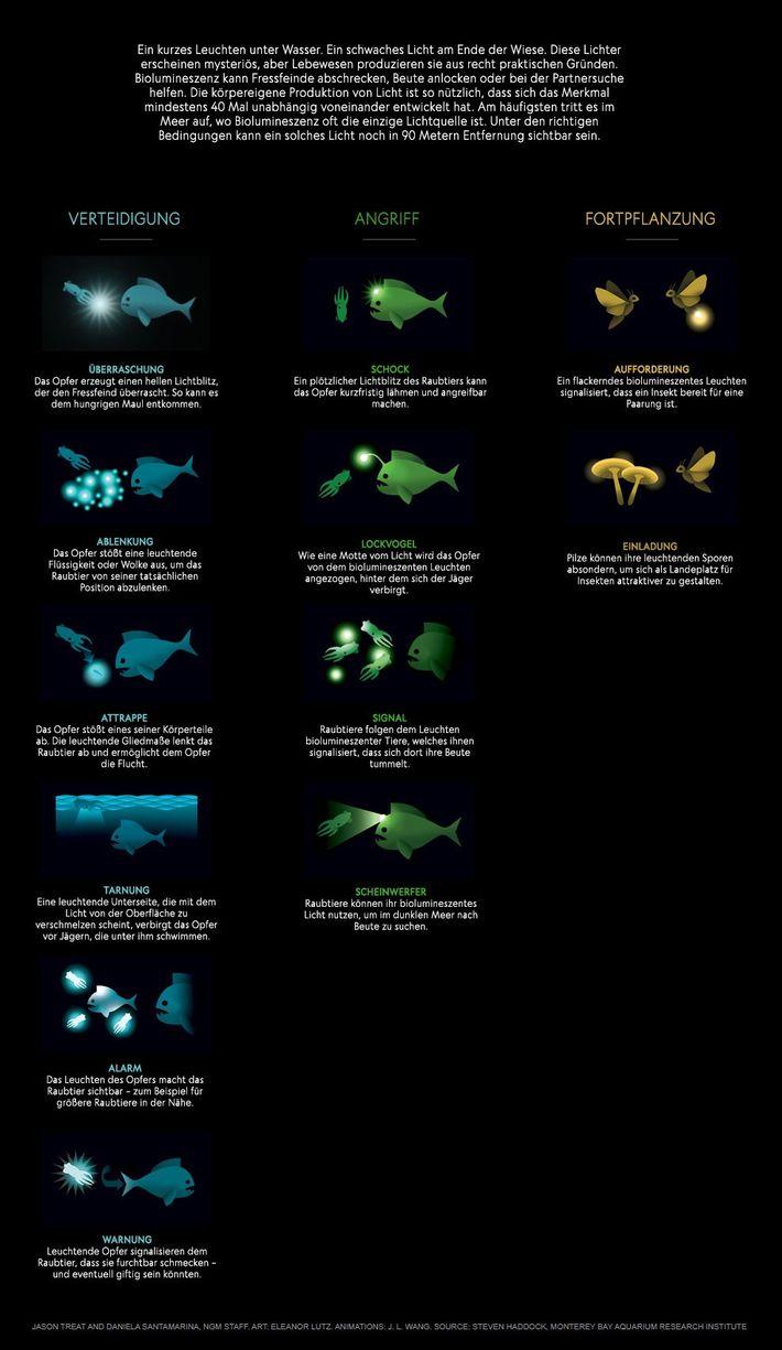 So funktioniert Biolumineszenz.