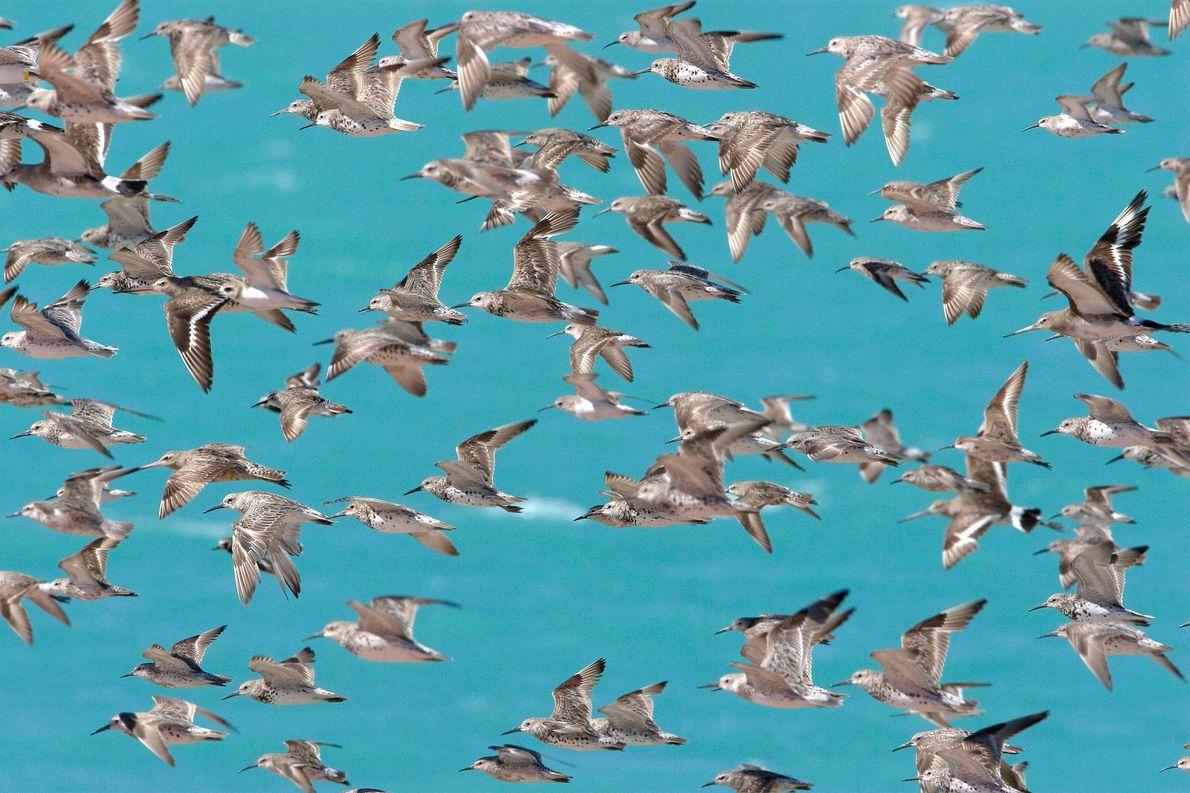 Vogelschwarm