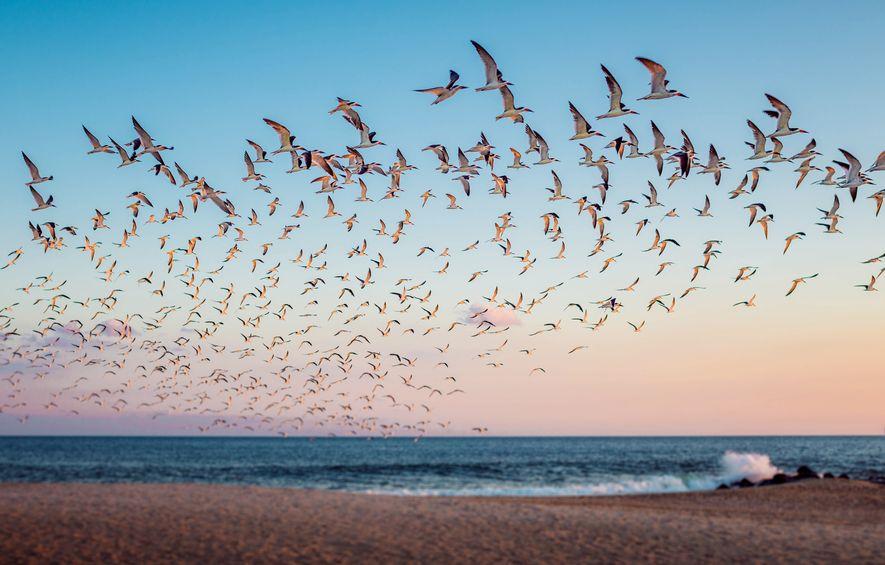 Top 10 Reiseziele für Vogelfreunde