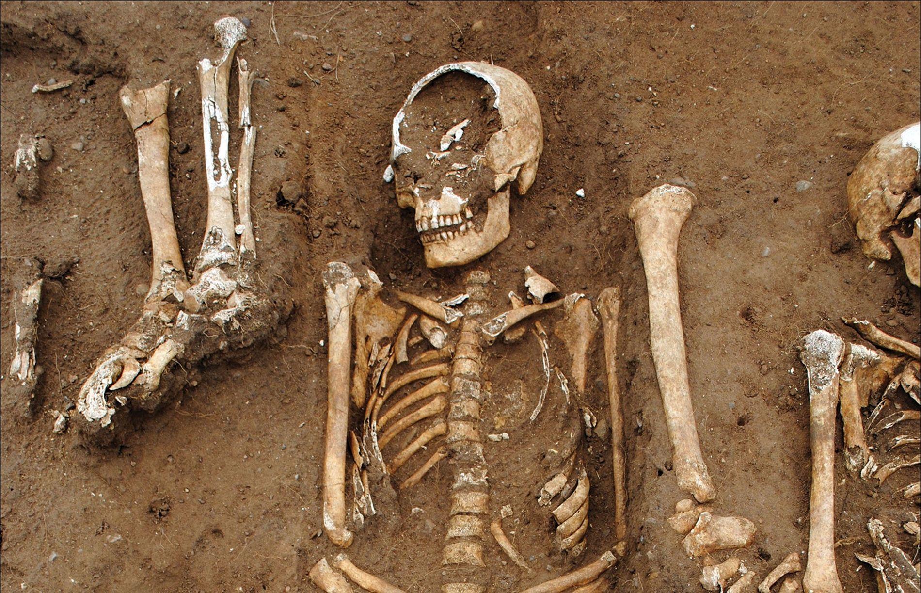 Auf dem Gelände der Thornton Abbey in England fanden Archäologen ein Massengrab mit vier Dutzend Pestopfern ...