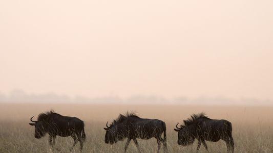 7 fantastische Naturwunder Afrikas