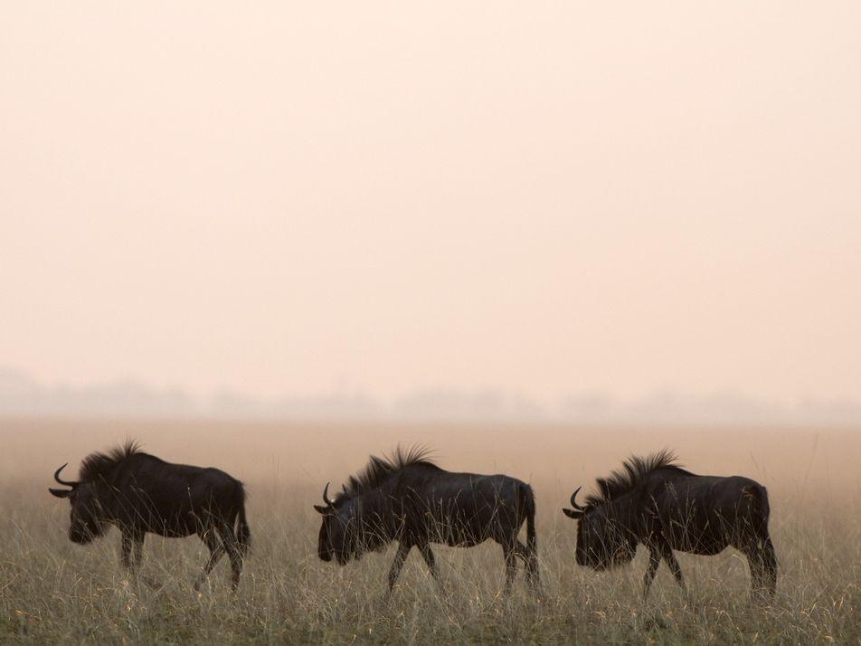 Galerie: 7 fantastische Naturwunder Afrikas