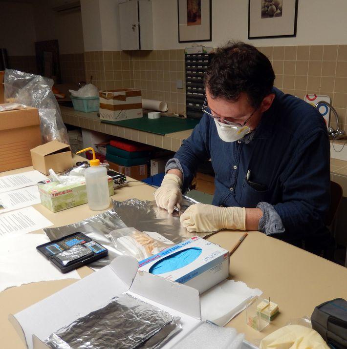 Rund 12.000 Jahre alt sind die Elchzähne aus Südfrankreich, die Hervé Bocherens hier untersucht.