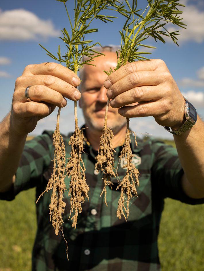 Boden retten: Wurzeln müssen Pilze tragen