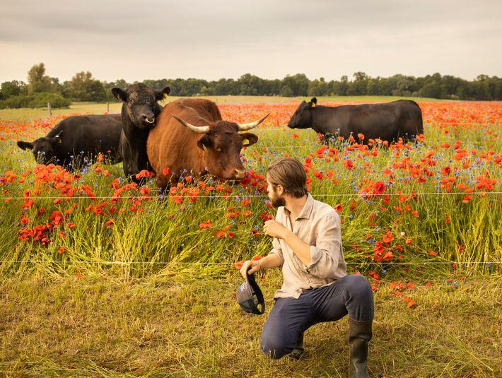 Bodenrettung: Rinder und Hühner spielen Schlüsselrolle