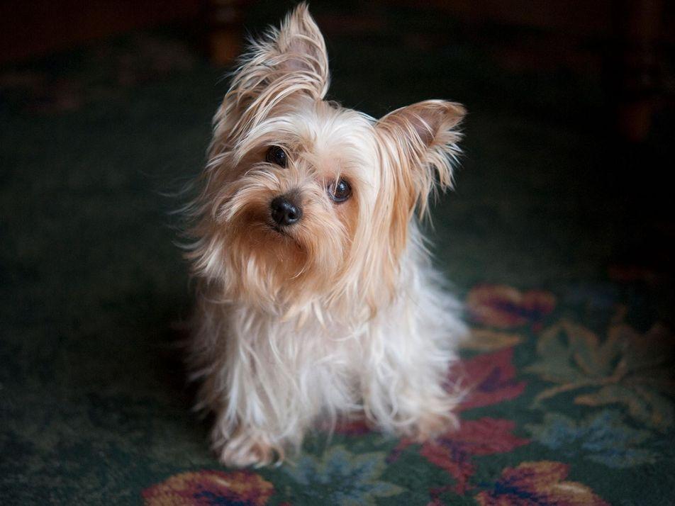MRT-Scans offenbaren, wie Hunde denken und fühlen