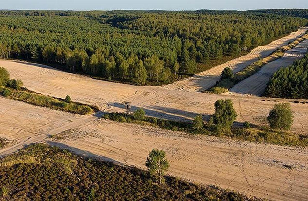 Der Truppenübungsplatz Oberlausitz beherbergt neben Wölfen auch viele andere seltene Tierarten. Brandschutzstreifen sollen verhindern, dass sich …