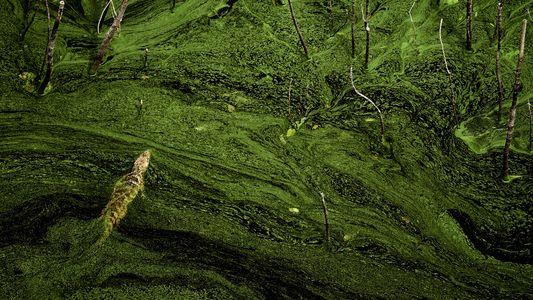 Galerie: Form und Farbe: 25 abstrakte Kunstwerke der Natur