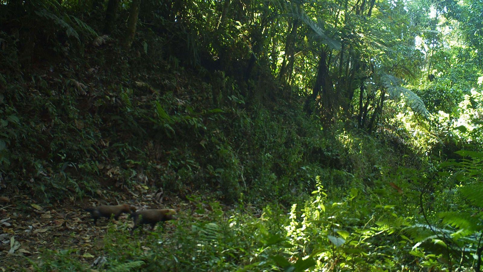Waldhunde
