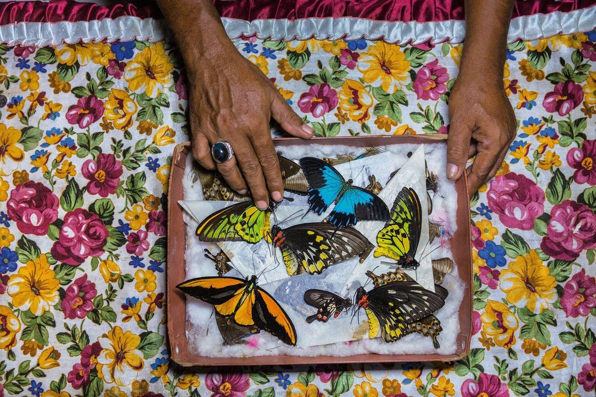 Ein Schmetterlingsfänger auf der Insel Bacan