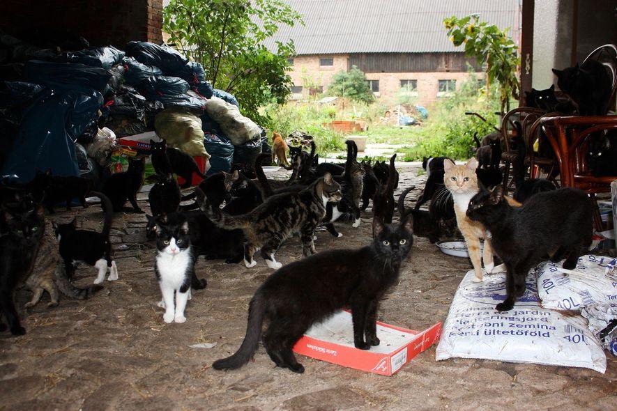 Galerie: Wenn Tierliebe zur Sucht wird – Animal Hoarding nimmt zu
