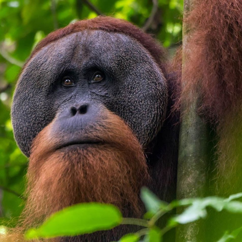 """Rettung der Regenwälder: """"Tourismus ist die einzige Chance"""""""
